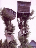 crazy tree houses