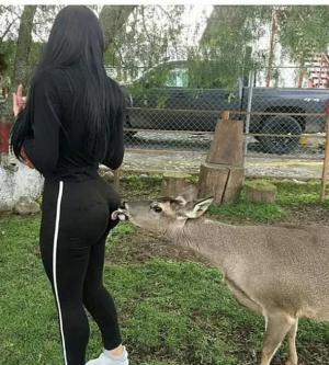 Deer Licking Her Big Ass