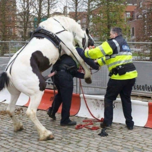 Horse Rapes Police Officer